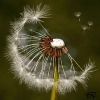 Taraxacum officinale by teufelchenonline