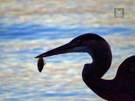 Heron And It's Catch by wolfwings1