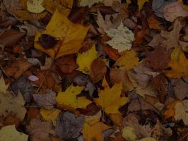 autumn leaves by PUBLIC-DOMAIN-PICS