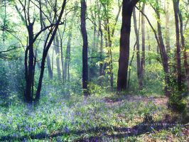 Bluebell Woods by ElyneNoir