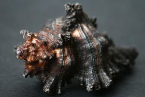 Sea shell stock 23 by Malleni-Stock