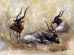 Rest Togerther - Addax by cheungchungtat