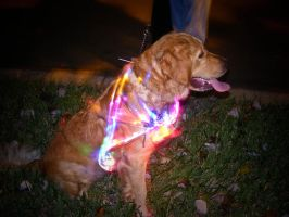 Light Up Dog by adorkable-cuteness