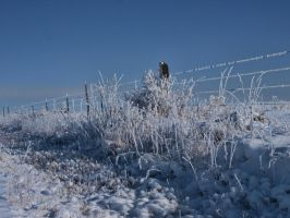 snowy fence 15 by fotophi