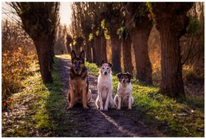 the three musketeers I by corniger-aries