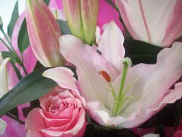 Casablanca Lilies And Roses by ChrisOnly