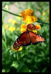 Butterfly View 01 by buildingclimber