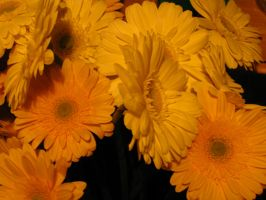 Orange Flowers by Rebelliousmunchkin