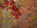Red oak autumn by Mogrianne