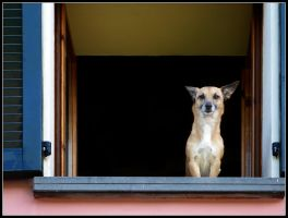 Window Dog by kanes