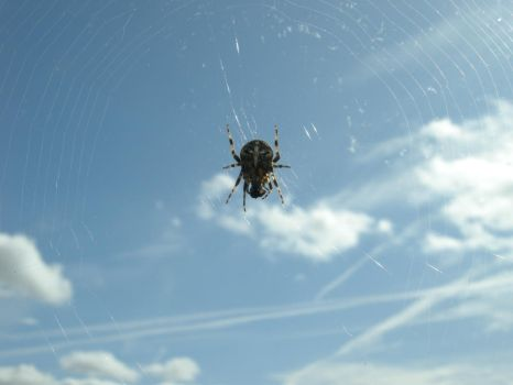Spider by H3nsh