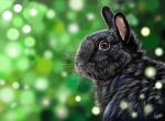 bunny, digital painting by Tinesdierportretten