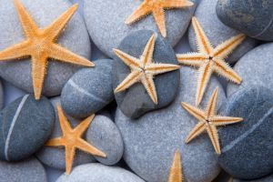 Starfish on Pebbles by Spanishalex