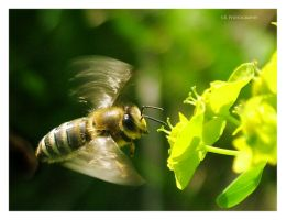 Flying bee macro by selley