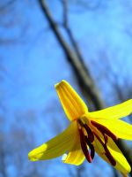 Yellow One by Nitersss