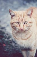 Neighbor Cat 2. by TheZoMbieMoshPiT
