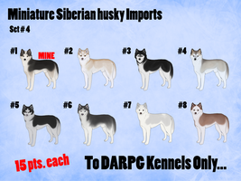 Miniature Siberian husky Imports - Set #4 by xMush-Kennelsx