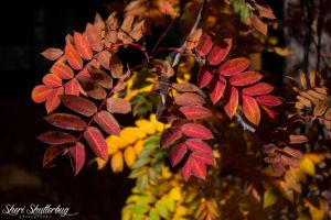 Fall Colors VII by Scooby777