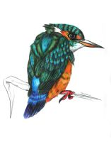 Kingfisher by Veavictis