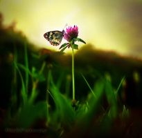About Being a Butterfly by RickPatway