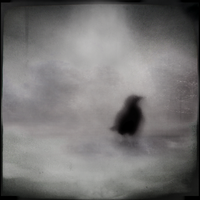 Winter Crow by intao