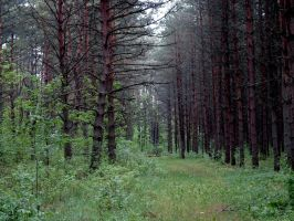 Forest 129 by MASYON