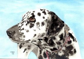 Dalmatian by RamonaQ