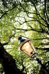 Green Park lamp by wilfriedF