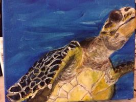 Critically endangered Hawksbill sea turtle by goshilpa