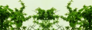 Organic Symmetry 8 by meathive