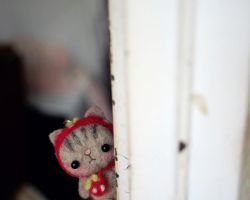 Yeah kitty by doily