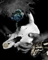 The Sacred Cow by fatalicon