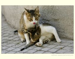 Mother and Kitten by sekhmet-neseret