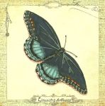 Red Spotted Purple Butterfly by LanternCatLounge