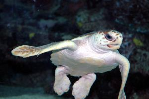 Turtle 3 by ACrazyCharade-Stock