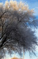 shaded frosted tree by chrisravensar