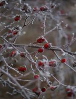 Frost Decorations by Callu