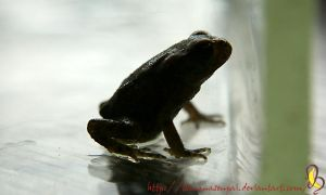 ..frog.. by cairesj