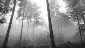 Raining Forest Slender by Binary-Map