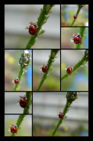 Lady Bug And Water Drops by bluedragoneye
