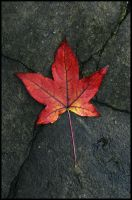 Autumn leaf by sourcow