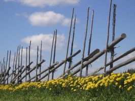 'Fence and Summer' by Suensyan