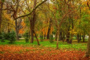 Autumn forest Oil paint filter by Th3R3v3nan7