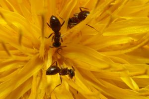 ants on yellow by webcruiser