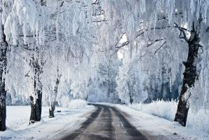 A Road through The Winter by iilva