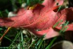 fall pt3 by these-photographs