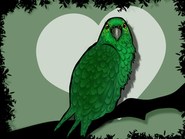 My baby Parrot by Rommeu