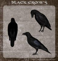 3D Black Crows by zememz