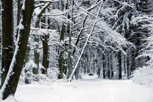 winter forest by Wilithin