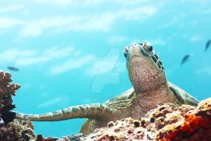Turtle V by MotHaiBaPhoto